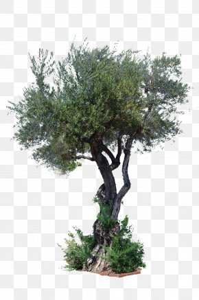 Tree Top View - Stock Photography Tree Art PNG