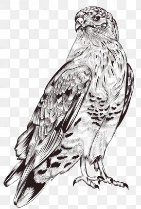 Owl Ah - Lion Dog Cat Illustration PNG