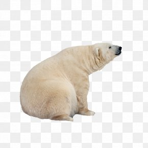 Polar Bear - International Polar Bear Day PNG