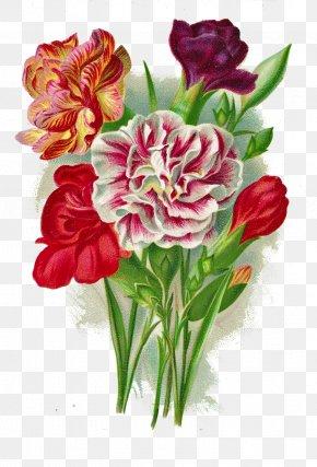 Antique - Paper Botanical Illustration Printing Antique PNG