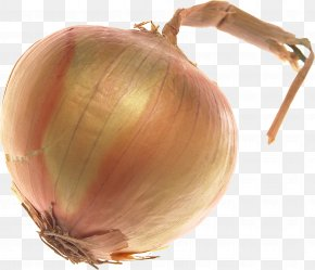Onion Image - Yellow Onion Shallot PNG