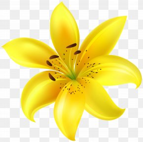Yellow Flower Clip Art Image - Yellow Petal Cut Flowers PNG