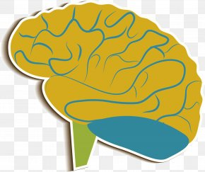Brain Medicine - Brain Cerebrum Clip Art PNG