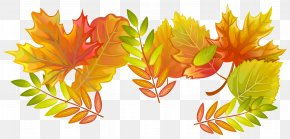 Fall Leaves Decorative Clipart Image - Autumn Leaf PNG