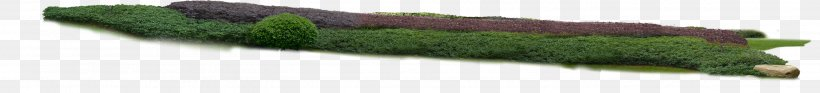 Grasses Tree Herb Plant Stem Family, PNG, 2838x324px, Grasses, Family, Grass, Grass Family, Green Download Free