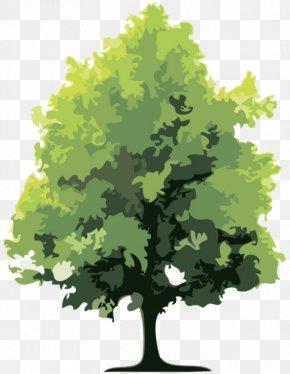 Forest - Forest Tree Holtzinger Sarl PNG