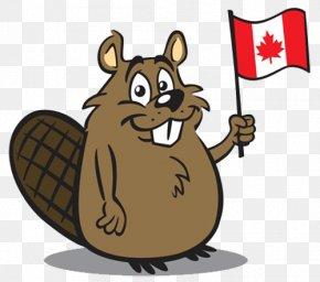 Flag Beavers - Canada North American Beaver Clip Art PNG