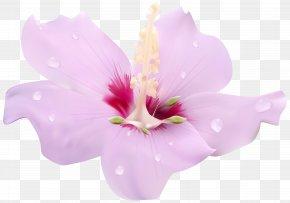 Pink Hibiscus Flower Transparent Clip Art Image - Hibiscus Flower Clip Art PNG
