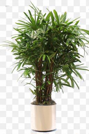 Potted Plant - Rhapis Excelsa Arecaceae Houseplant Areca Palm PNG