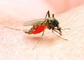 Mosquito - Marsh Mosquitoes Mosquito-borne Disease Zika Virus Mosquito Control Malaria PNG
