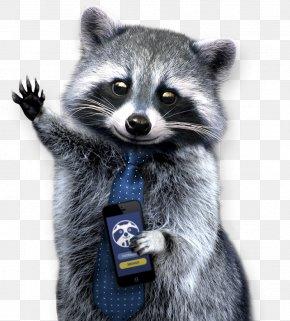 Raccoon - Raccoons: A Natural History Clip Art PNG