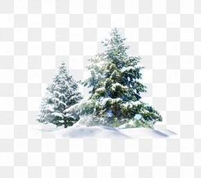 Christmas Snow Tree Creative - Polar Bear Snow Pine Wallpaper PNG