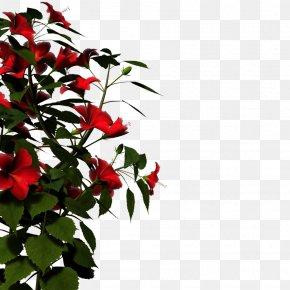 Nature HD - Flower Clip Art PNG