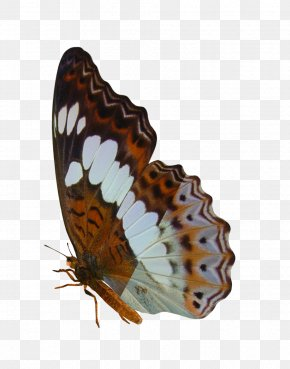 Buterfly - Butterfly Insect Art Moth PNG