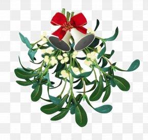 Mistletoe - Mistletoe Kissing Traditions Phoradendron Tomentosum Christmas PNG