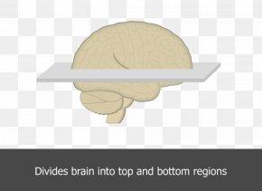 Plane - Horizontal Plane Brain Angle Table PNG