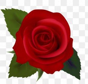Rose Clip Art - Rose Red Clip Art PNG