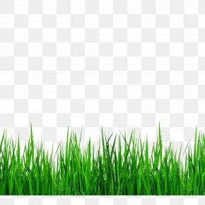 Green Grass Border Details - Download Grasses Clip Art PNG