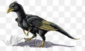 Colorful Bird - Bird Common Raven Beak Feather Vulture PNG
