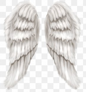 White Angel Wings Transparent Clip Art Image - Cherub Wing Angel PNG