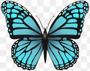 Symmetry Monarch Butterfly - Monarch Butterfly PNG