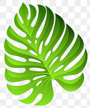 Exotic Green Plant Decoration Clipart Image - Plant Flower Clip Art PNG