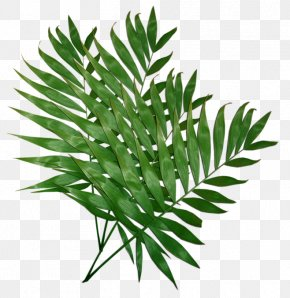 Leaf - Palm Trees Leaf Clip Art Trees And Leaves PNG