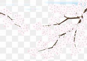 Cherry Blossoms - Cherry Blossom Adobe Illustrator PNG
