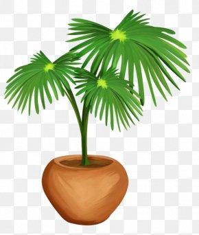 Tree - Arecaceae Asian Palmyra Palm Woody Plant Tree PNG