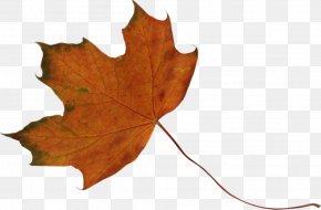 Maple Leaf - Maple Leaf Green DeviantArt PNG