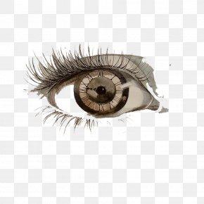 United States Pupil Eyes Wearing Brown Curly Eyelashes - Drawing Eye Painting Art Sketch PNG