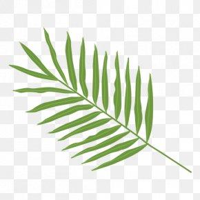 Palm Leaves - Palma Leaf Arecaceae Clip Art PNG