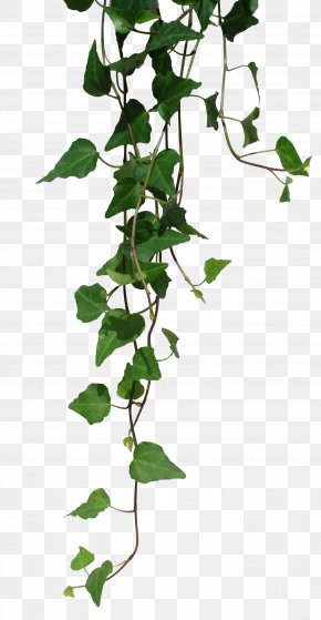 Transparent Vines - Unearthed Arcana Dungeons & Dragons Pathfinder Roleplaying Game Weapon Elf PNG