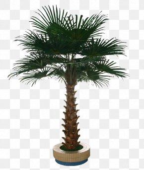 Palm Tree - Washingtonia Robusta Tree Arecaceae Interior Design Services PNG