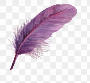 Feather - Feather Icon PNG