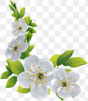 Cherry Blossom - Cherry Blossom Spring Cut Flowers PNG