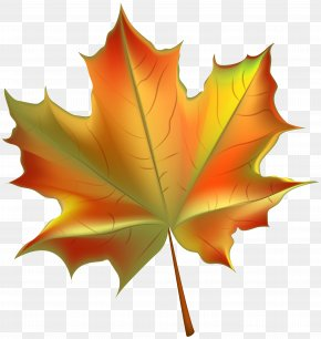 Beautiful Autumn Leaf Transparent Clip Art Image - Autumn Leaf Color Clip Art PNG