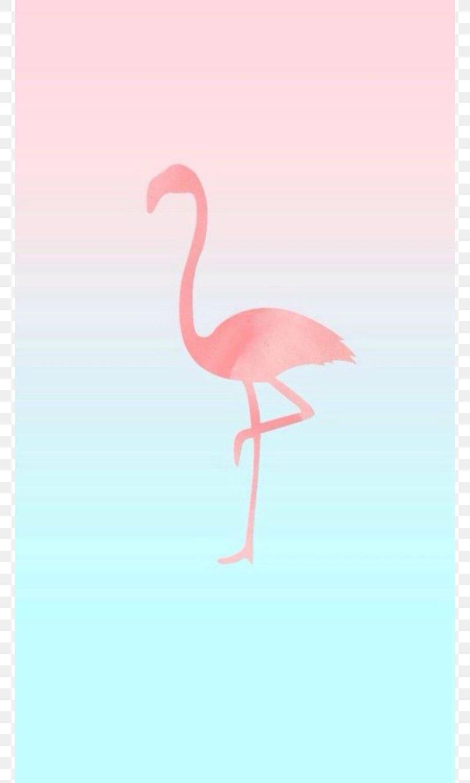 Iphone 6 Iphone 7 Flamingos Desktop Wallpaper Wallpaper Png