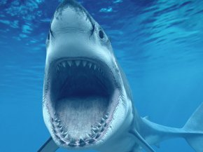 Sharks - Shark 4K Resolution Ultra-high-definition Television High-definition Video Desktop Wallpaper PNG