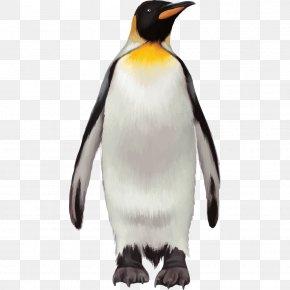 Penguin - Penguin Bird Cartoon PNG