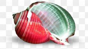 Seashell - Seashell Cockle Mollusc Shell PNG