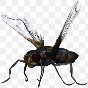 Bug Image - Insect PNG