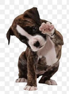 Hello Puppy - American Bulldog Boxer American Bully American Pit Bull Terrier PNG