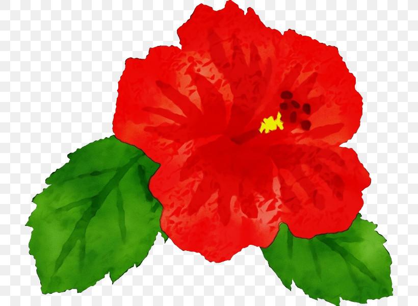 Flower Hawaiian Hibiscus Petal Red Hibiscus, PNG, 722x600px, Watercolor, Chinese Hibiscus, Flower, Geranium, Hawaiian Hibiscus Download Free