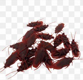 April Fool 's Day Gift Props False Cockroaches - April Fools Day Practical Joke Cockroach Cartoon PNG