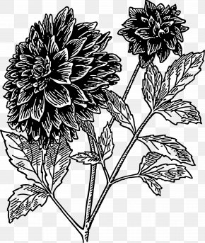 Flower - Dahlia Flower Drawing Clip Art PNG