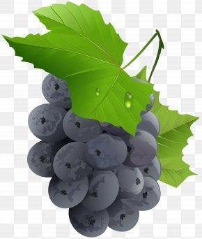 Grapes Transparent Clip Art Image - Grape Fruit Vegetable PNG
