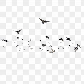 Birds - Bird Brusnitsyny Mansion PNG