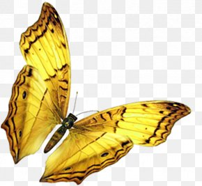 Golden Butterfly - Butterfly Insect Wing PNG