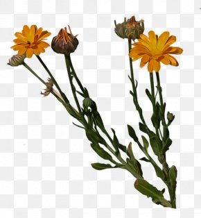 Orange Flower - Cut Flowers Pot Marigold Plant Stem PNG